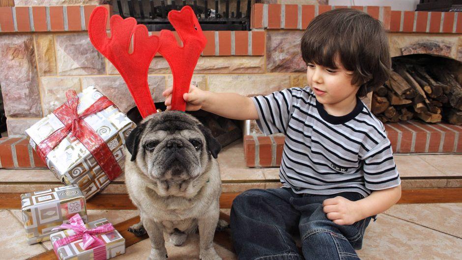 Die Deutschen beschenken ihre Haustiere an Weihnachten.