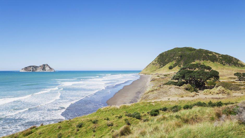 An der Küste von Neuseeland.