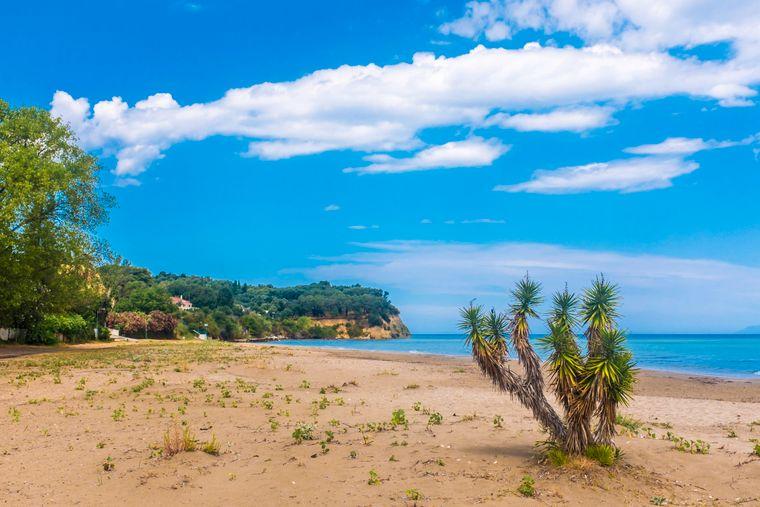 Yucca-Palme am Strand von Roda auf Korfu.