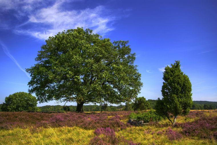 In der Lüneburger Heide kannst du auch wunderbar wandern.