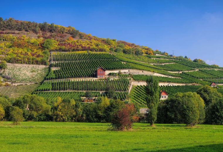 Saale-Unstrut ist das nördlichste Weinanbaugebiet Deutschlands.