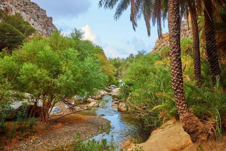 Die Kretische Dattelpalme findest du überall auf der Insel, hier in der Lagune von Preveli.