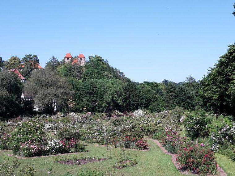 Der Blick über den Reinhausener Rosenpark.