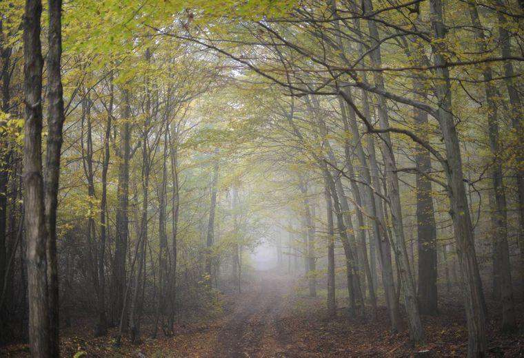 Der Urwald vor den Toren der Stadt zwischen Saarbrücken und Riegelsberg ist naturbelassen und entwickelt sich von Jahr zu Jahr mehr zur Wildnis.