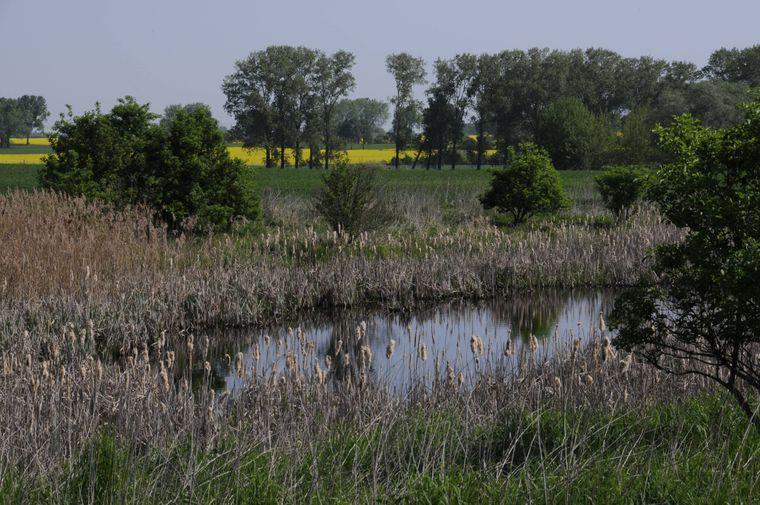 Der Rundweg führt vorbei an Wiesen und Feldern, Auen und Sümpfen - hier im Naturpark Barnimer Feldmark.
