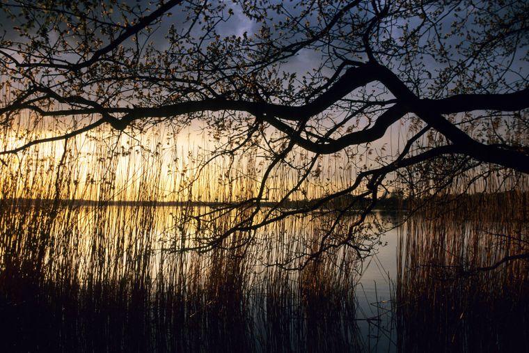 Sonnenuntergang über dem Großen Teich Torgau – unter der Wasseroberfläche warten spektakuläre Abenteuer auf dich.