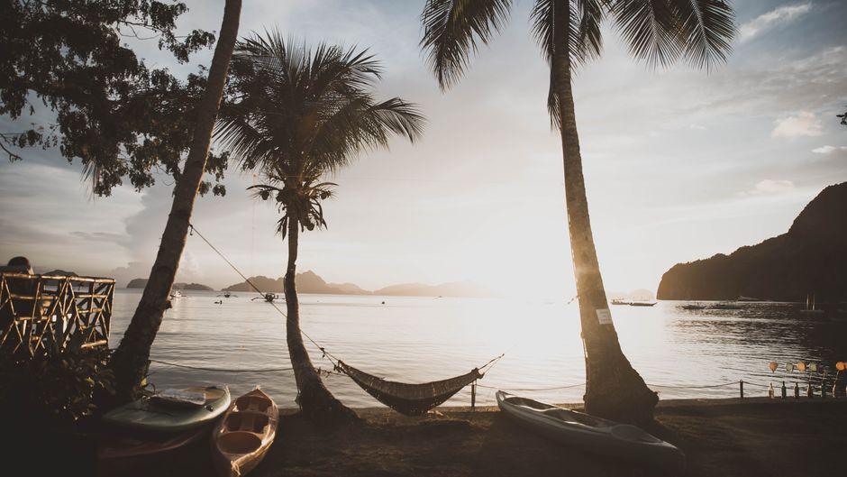 Eine Hängematte ist zwischen zwei Palmen aufgespannt.