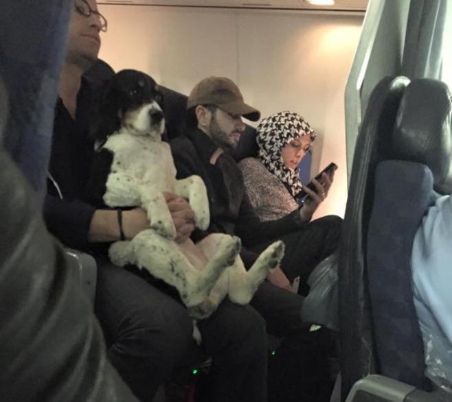 Hund sitzt im Flugzeug bei Herrchen auf dem Schoß.