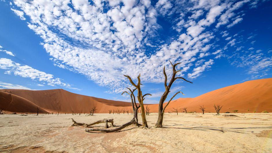 Das Dead Vlei in Namibia.