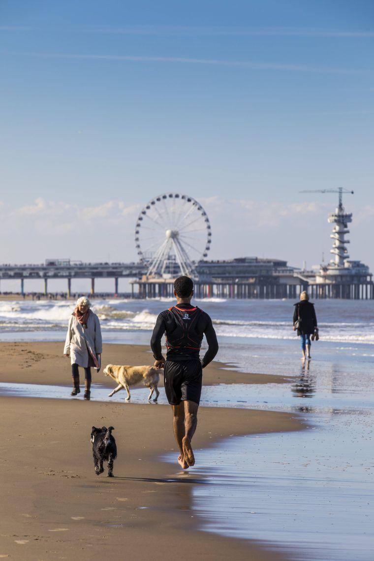 Am Strand von Scheveningen begegnest du vielen Urlaubern mit Hund.