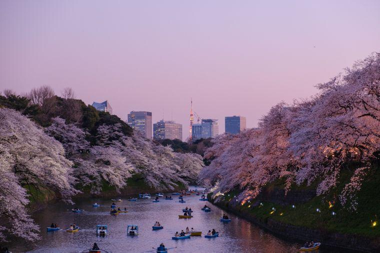 Während der Kirschblütenzeit wirkt der ganze Park rosa-weiß verzaubert und sorgt für eine romantische Atmosphäre.