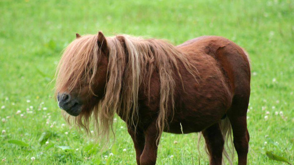 Ein Pferd in gewohnter Umgebung. (Symbolbild)