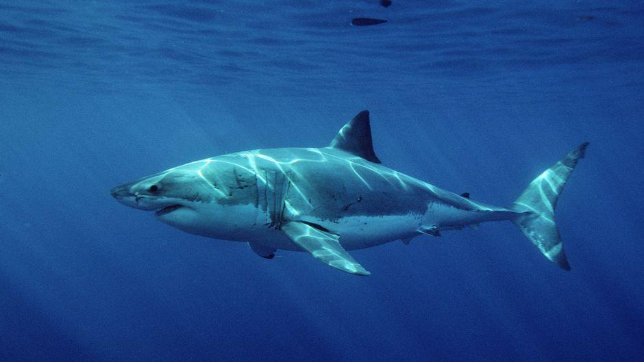 Es ist der dritte Hai-Angriff in Cid Harbour innerhalb weniger Monate. (Symbolfoto)