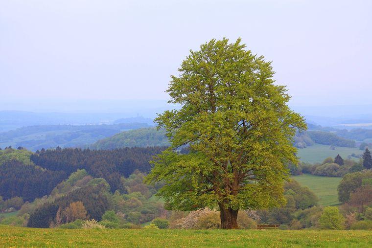 Der Hohe Westerwald