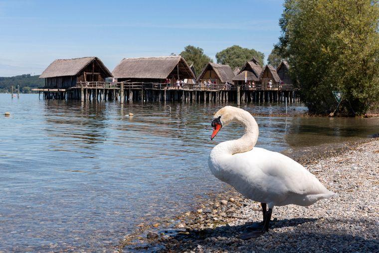 Die Pfahlbauten in Unteruhldingen am Bodensee sind nachgebaut.