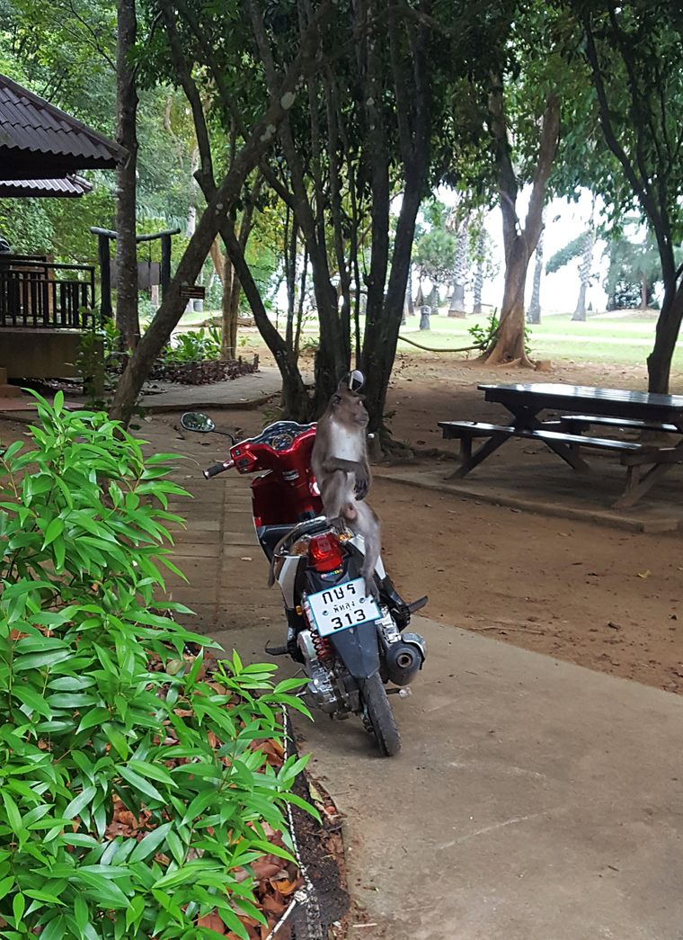 Nichts am Roller vergessen, denn im Nationalpark finden auch die Affen dran gefallen.