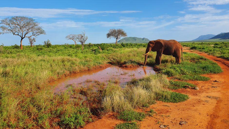 Im Tsavo-East-Nationalpark brannte eine Fläche von 200 Hektar ab.