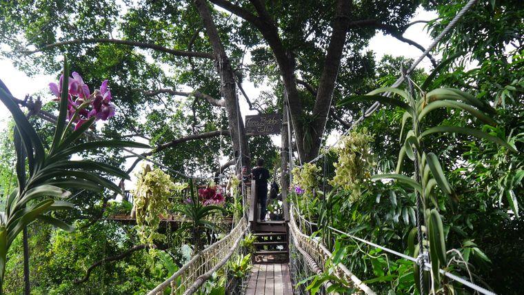 Mitten im Dschungel von Koh Samui erwartet dich ein Baumhaus-Café – dorthin gelangst nur über Hängebrücken.