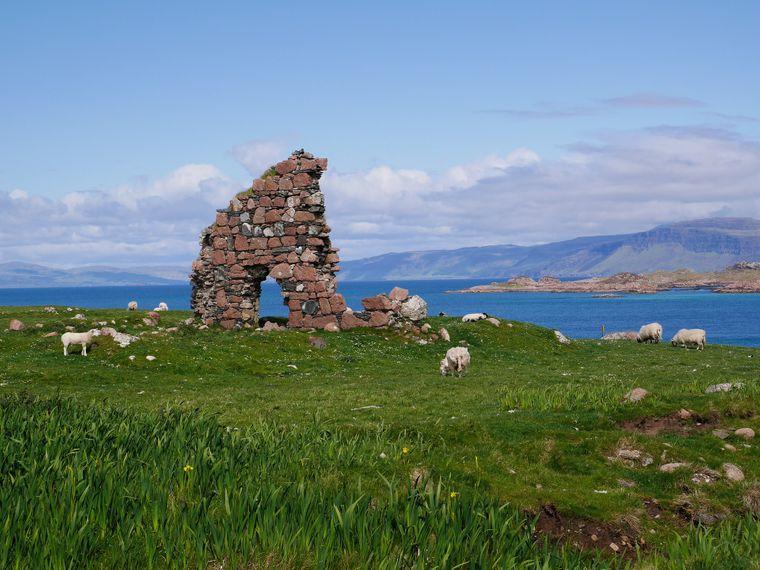 Flache Hügel mit üppigem Grün und weidende Schafe schmücken das Friedensbild.