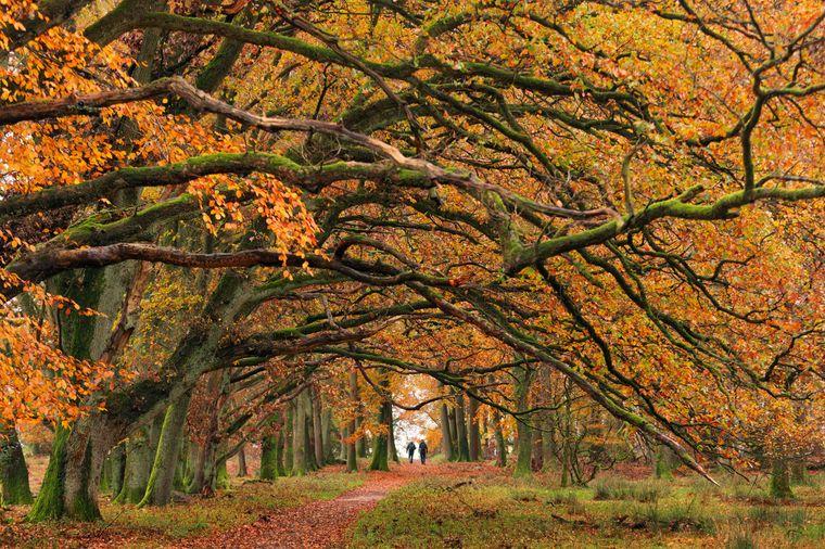 Der entspannte Heidschnuckenweg führt durch die schöne Lüneburger Heide.