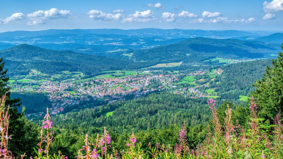 Blühende Berglandschaft