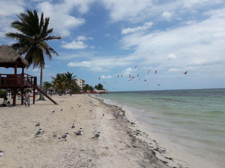 Ein Vogelschwarm verirrt sich über den Strand von El Nino.