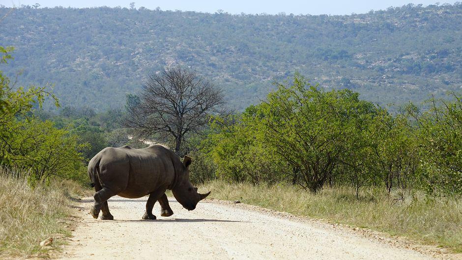 Afrikas artenreiche Tierwelt kannst du dir nun auch virtuell anschauen. (Symbolbild)