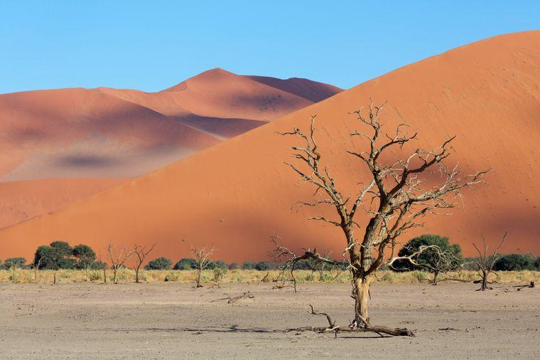 Sossulvei in der Wüste Namib, Namibia