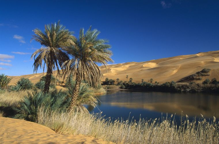 Dattelpalmen säumen eine Oase in Um El Ma in Libyen.