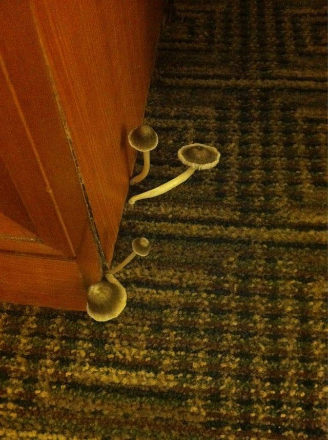 Pilze im Hotelzimmer.