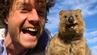 Must-do in Australien: ein Quokka-Selfie.