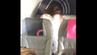 Der schamlose Wolkenritt in der letzten Sitzreihe im Flugzeug wurde im Video festgehalten.