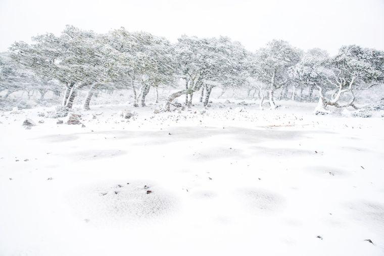 """Der Gewinner der Kategorie """"Landschaften und Erdelemente"""" heißt Allessandro Carboni. Am frühen Morgen fotografierte er auf Sardinien, im Park von Giara, während eines Schneesturms."""