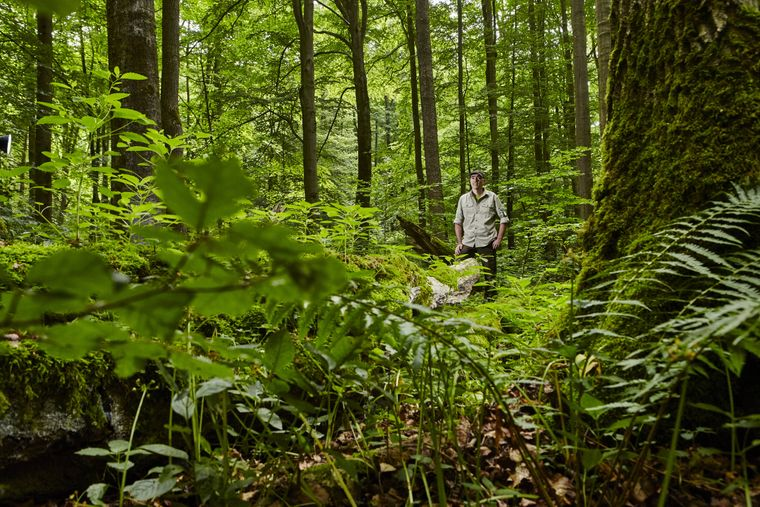 Im Nationalpark Hainich kannst du entlang eines echten Urwalds wandern.