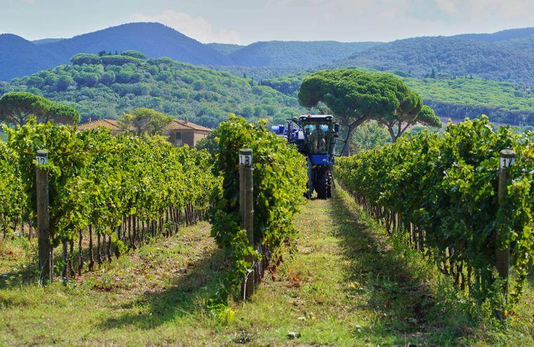 Die Toskana ist die wohl bekannteste Weinanbauregion Italiens. Wer guten Rotwein liebt, wird hier nie wieder weg wollen.