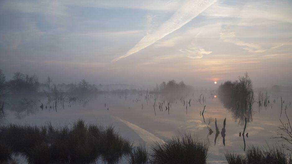 Morgendlicher Nebel im Nationalpark Mor-Bargerveen in der Provinz Drenthe.