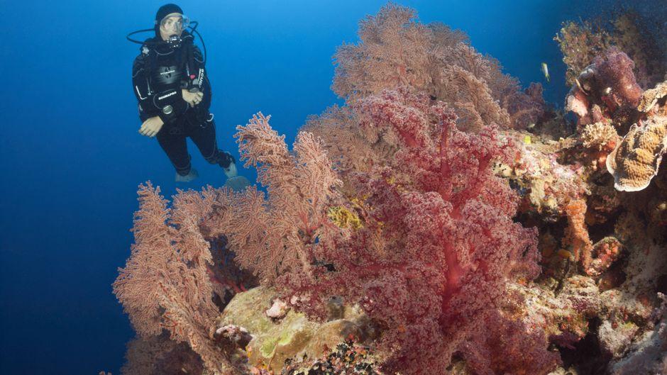 """Ein Taucher im Great Barrier Reef – Touristiker sagen: """"Das Riff ist immer noch bunt."""""""