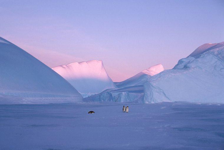 Pinguine laufen durch die Antarktis.