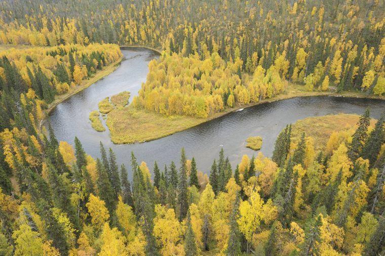Der Kitkajoki-Fluss im Oulanka-Nationalpark.
