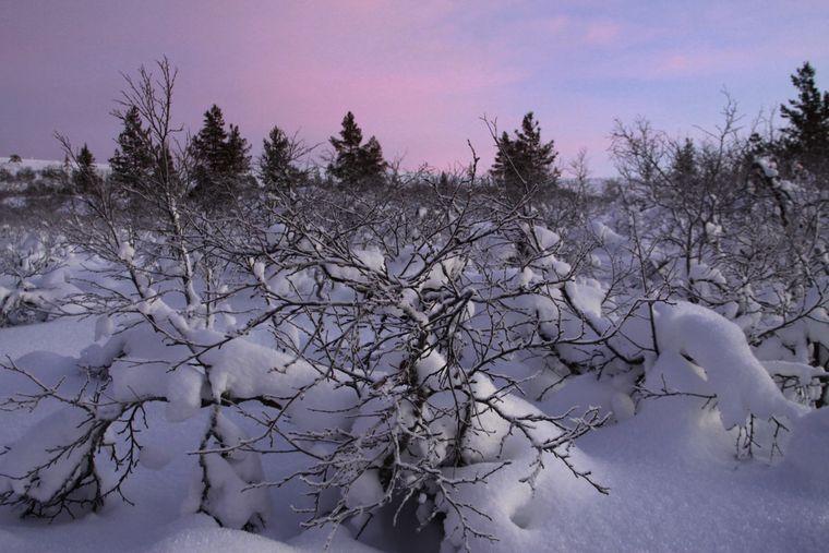 Verschneite Landschaft in Lappland.