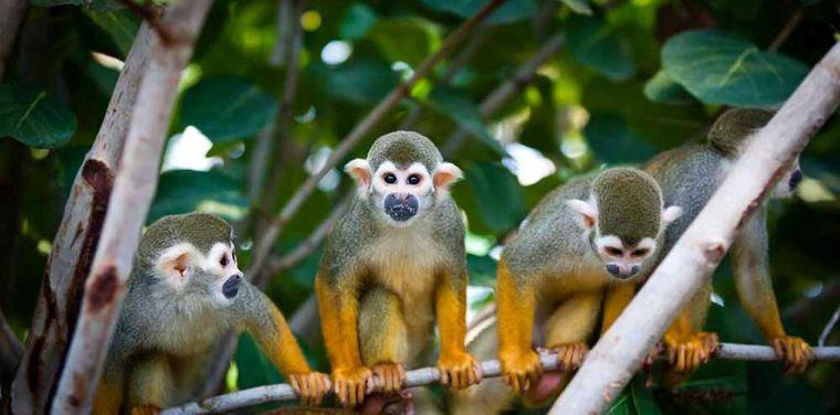 Affen im Leipziger Zoo