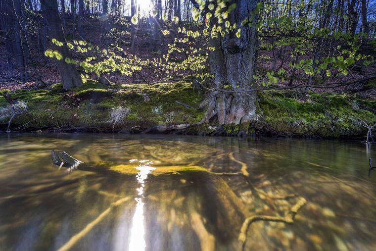 Die Sonne spiegelt sich am Ufer des Großen Stechlinsees in Brandenburg.