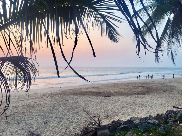 Sandstrand mit Palmen auf Sri Lanka.