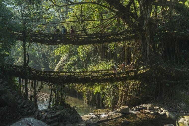 De Wurzeln des Gummibaums sind ein Hauptbestandteil der einzigartigen Meghalaya-Brücken in Indien.