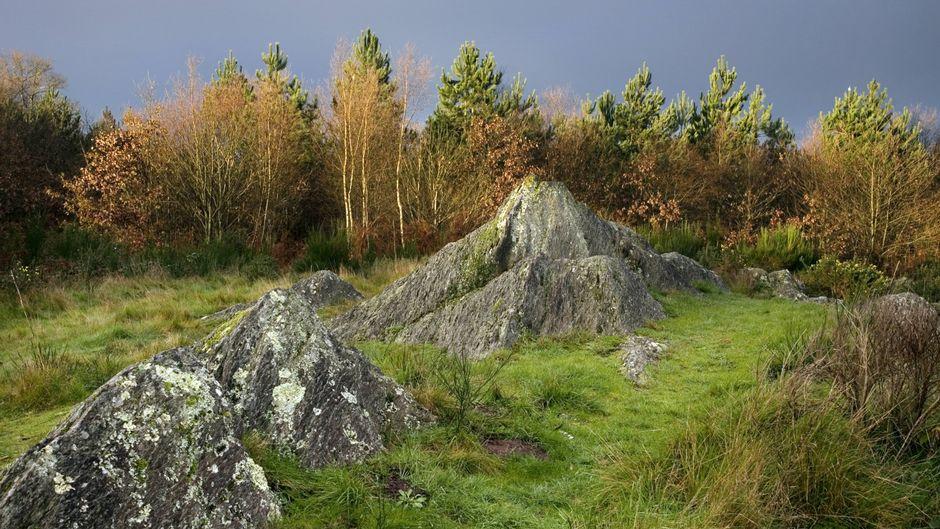 Der Wald von Brocéliande in der Bretagne ist ein Ort voller Legenden.