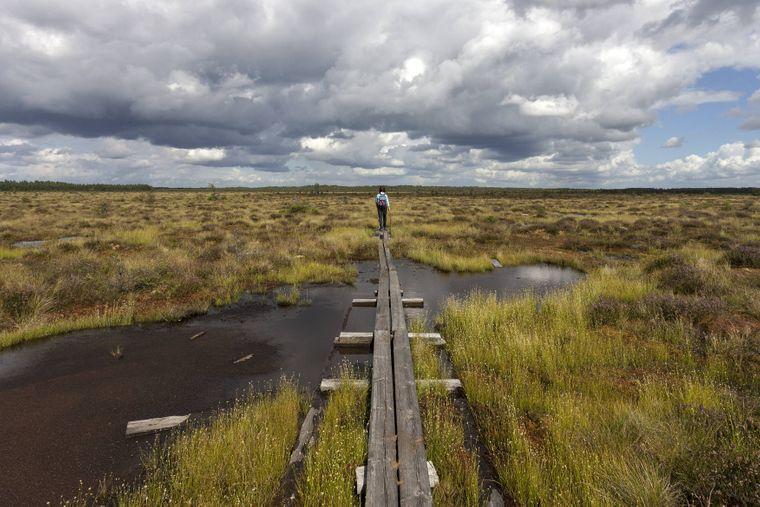Auf dem Holzsteg durch die Moorlandschaft wandern – Einsamkeit im Hochmoor und Sumpfgebiet vom Nationalpark Store Mosse.