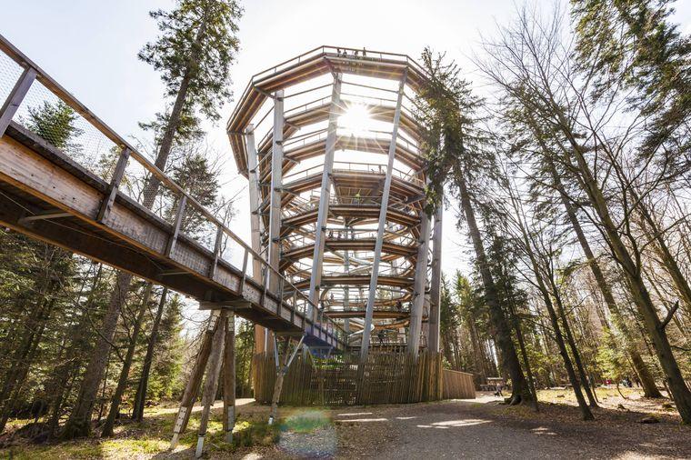 Baumwipfelpfad im Schwarzwald.