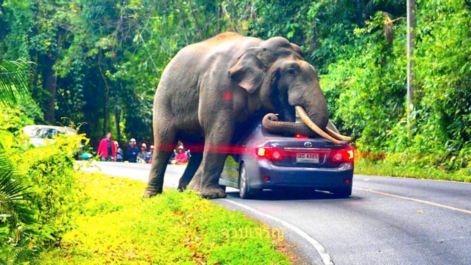 Die mächtigen Stoßzähne und der kräftige Rüssel ruhen auf dem Heck eines Autos. Andere Parkbesucher beobachten den Moment.