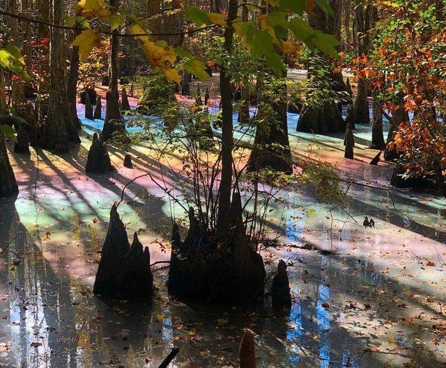 Nein, das war nicht Photoshop. Dieser Sumpf strahlt tatsächlich in den Farben des Regenbogens.