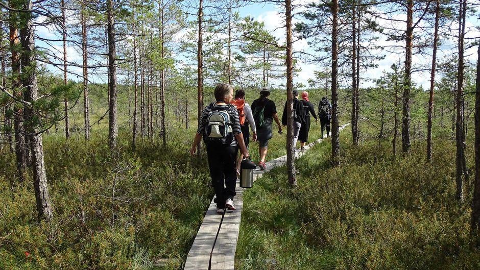 Vielfältig: Im Valkmusa-Nationalpark gibt es mehr als 30 unterschiedliche Sumpftypen. Besucher erkunden sie auf einem Plankenweg.